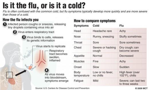 cold vs flu virus